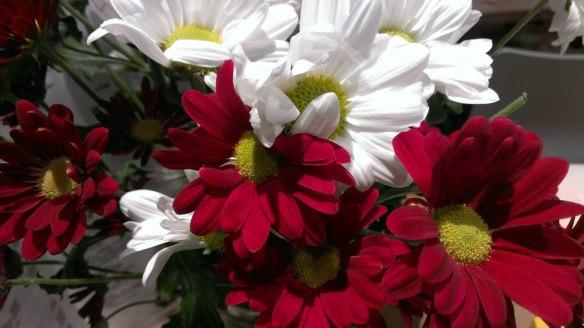 lost_in_la_concha_san_valentin_flores_donostia_san_sebastian_euskadi_pais_vasco